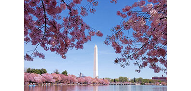 1912 Japanese cherry trees were first planted in Washington, D.C. along the Potomac